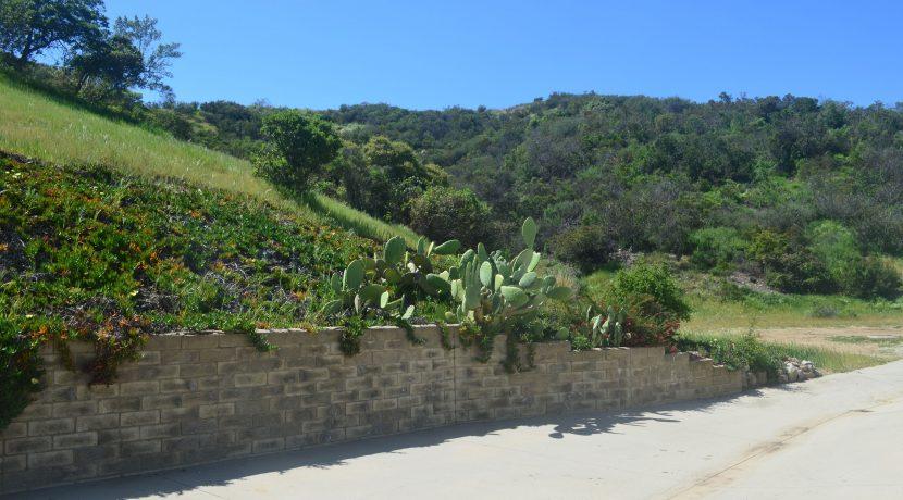 Surrounding hillside